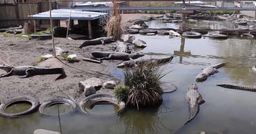 Colorado-Gators