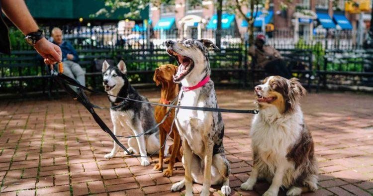 dog-walking-business
