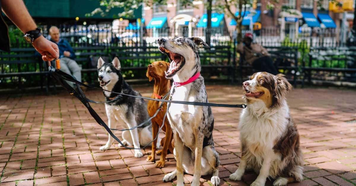 Read more about the article How to start a dog walking business! Everything you need to know to start your dog walking business today!