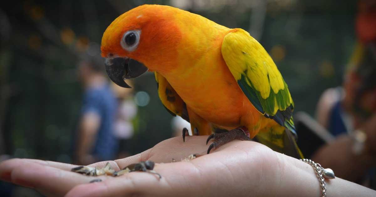 The best pet birds, 8 best pet for apartment.
